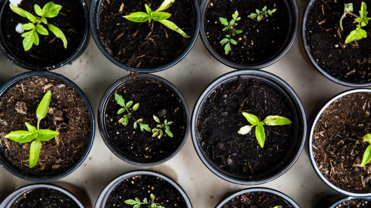 6 Ways to Grow This Year